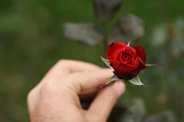 Rose Presentation Ritual