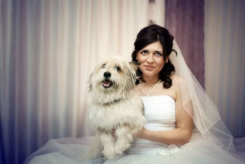 bride and wedding pooch