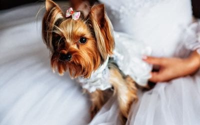 14 Creative Ideas to Include Pooch in Your Vegas Wedding